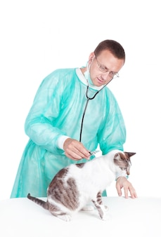 De dierenarts stelde een kat vast in de stethoscoop van een dierenkliniek. geïsoleerd op een witte muur.