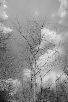 De dode staande boom achtergrond blauwe lucht en wolken.