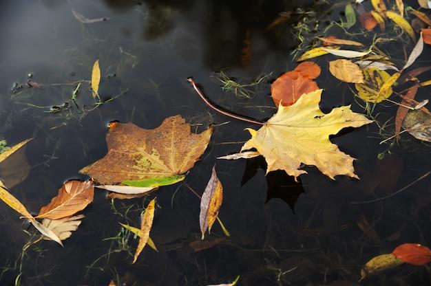 De droge herfstbladeren liggen op het wateroppervlak.