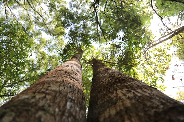 De dubbele boom sprong omhoog in de lucht.