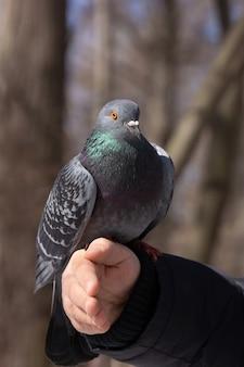 De duif in de hand