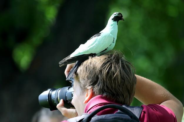 De duif zit op het hoofd van een fotograaf