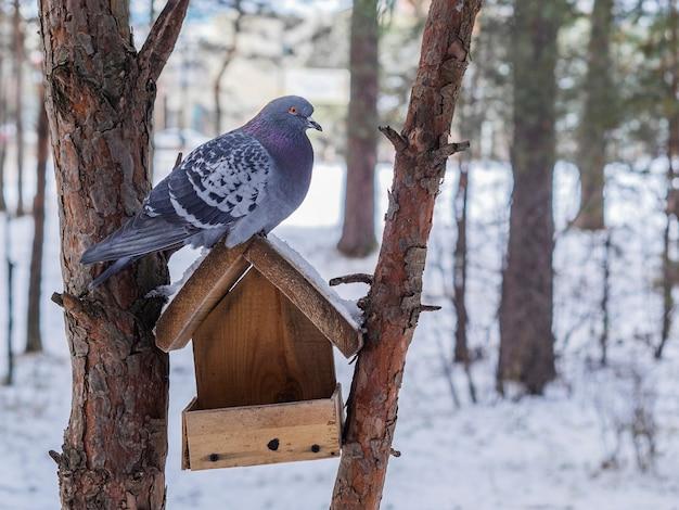 De duivenvogel zit op het dak van een huisje
