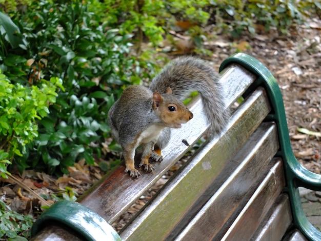 De eekhoorn in het park, kaapstad, zuid-afrika