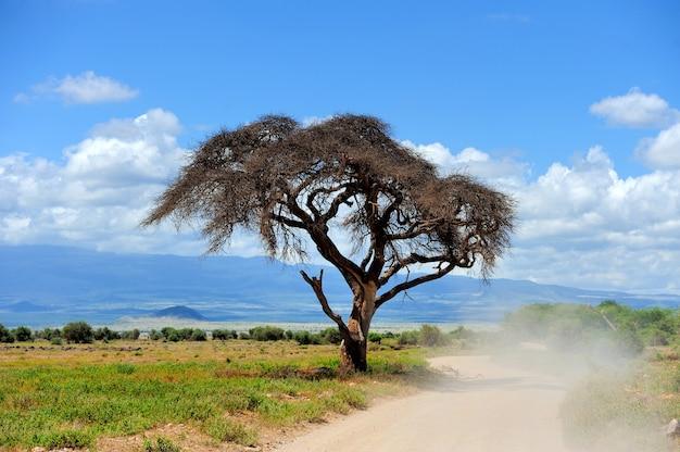 De eenzame boom. kenia, oost-afrika
