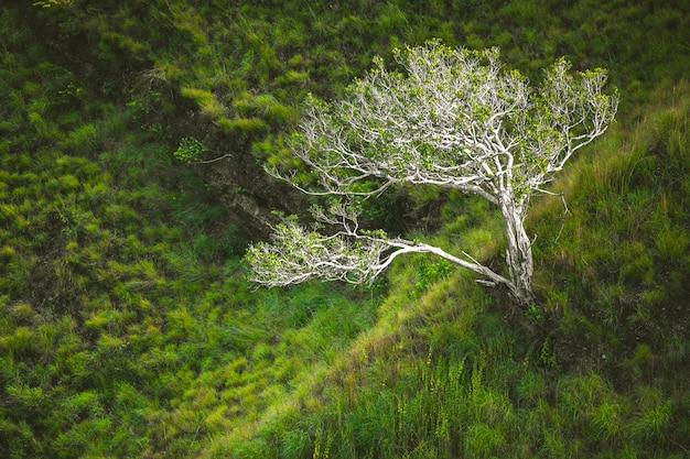 De eenzame boom onder het groene gras. aziatische scène.