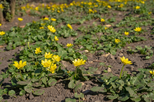 De eerste bloemen begin dit jaar