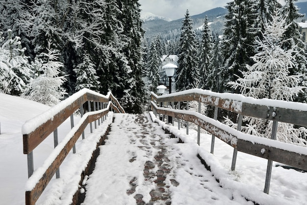 De eerste sneeuw viel, het begin van de winter: voetafdrukken in de sneeuw.