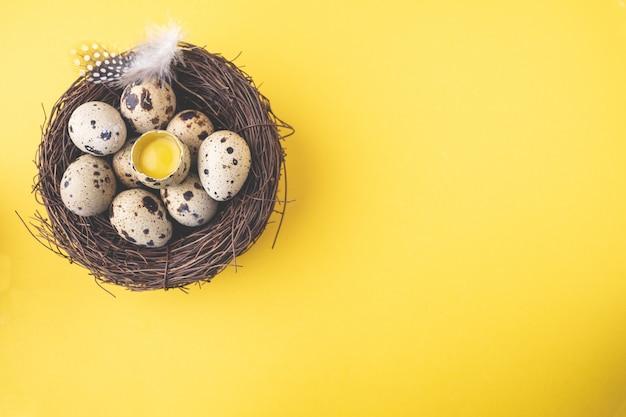 De eieren van kwartels in vogelnest met veer op pastelkleur gele achtergrond