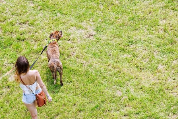 De eigenaar en de hond lopen op een zomerse dag op het gras. gras achtergrond voor tekst. ruimte kopiëren.