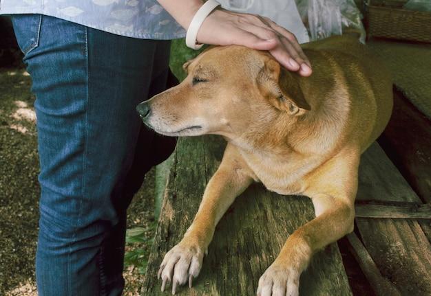 De eigenaar streelde de hondenkop met liefde.