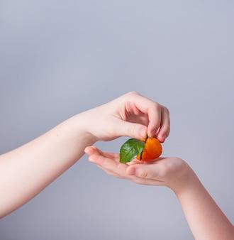 De ene hand legt een zoete en sappige mandarijn in de hand van het andere kind op een grijze achtergrond. vooraanzicht