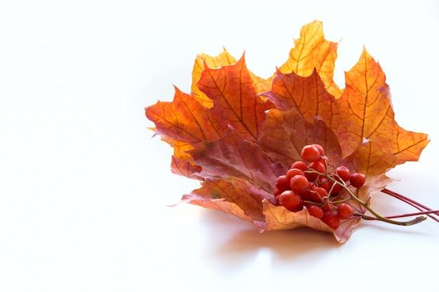 De esdoornblad van de herfst dat op wit wordt geïsoleerd