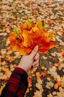 De esdoornbladeren van de herfst in vrouwenhand