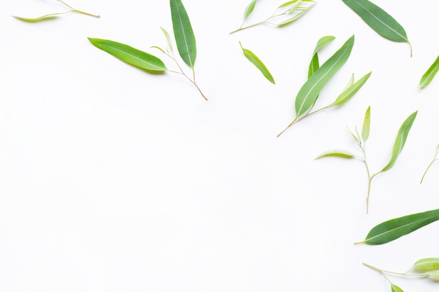 De fles van de eucalyptusetherische olie met bladeren op wit.