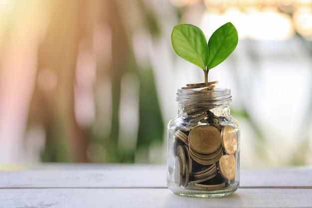 De fles van het glas om geld te zetten en heeft blad van zaailingen op houten vloer.