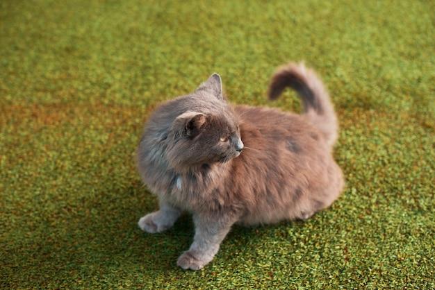De foto van een leuk klein katje op gras kijkt achterin