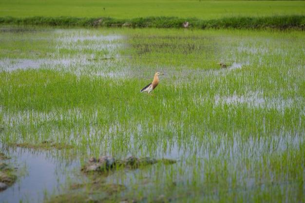 De foto van vogels in het grasveld die op zoek zijn naar voedsel