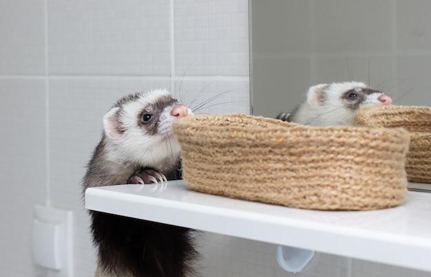 De fret speelt in bad