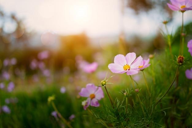 De frisse kleurrijke bloem in de natuur plaats