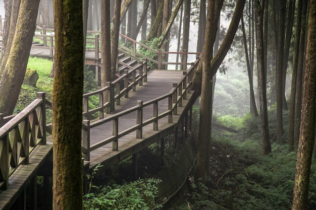 De gang van hout in alishan-bos bij het nationale park van alishan, taiwan.