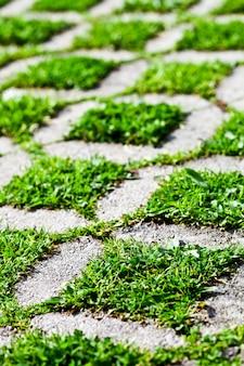 De gangweg van het steenblok met groen gras