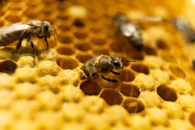 De geboorte van een jonge bij. de bij is geboren en komt uit de honingraat.