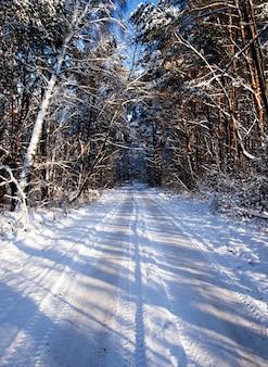 De gebruikelijke weg die door het bos loopt. winter seizoen