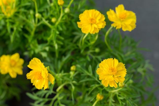 De gele bloemen