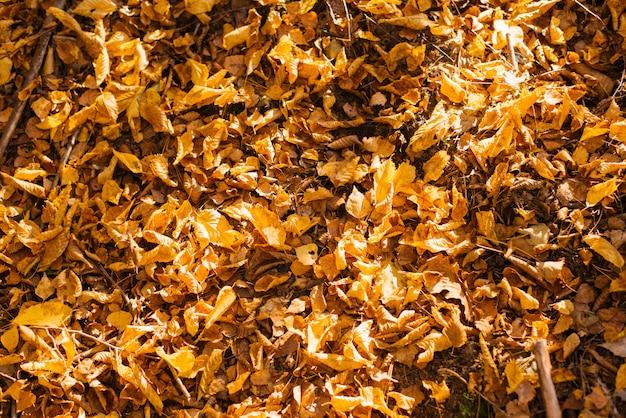 De gele gevallen de herfstbladeren liggen op de grond