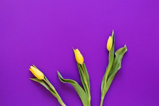 De gele regeling van tulpenbloemen op violette exemplaar ruimteachtergrond