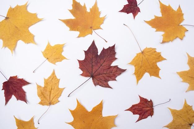De gele rode bladeren van esdoornbladeren op wit