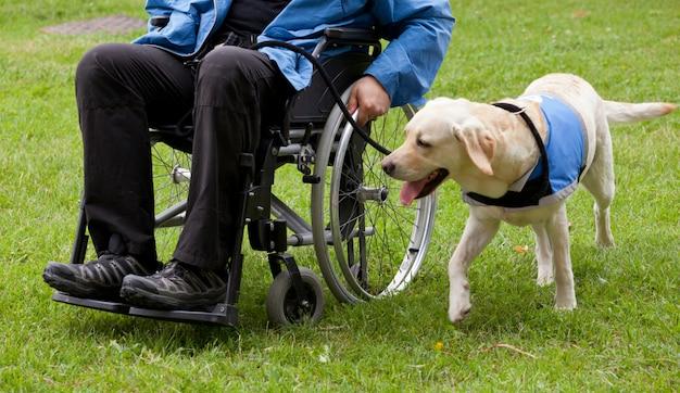 De geleidehond van labrador en zijn gehandicapte eigenaar