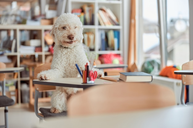 De gelukkige hondstudent zit in de klas van de basisschool en bereidt zich voor op lessen