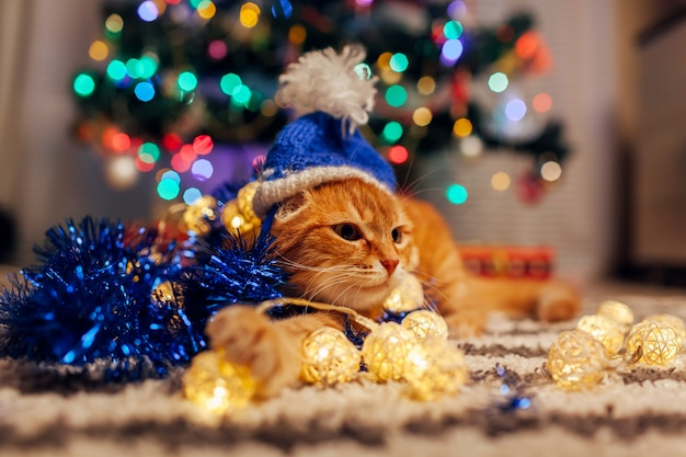 De gemberkat draagt de hoed van de kerstman onder het spelen van de kerstboom met lichten en klatergoud. kerstmis en nieuwjaar concept
