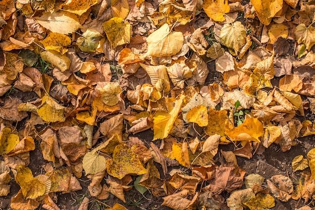 De gevallen bladeren in het park