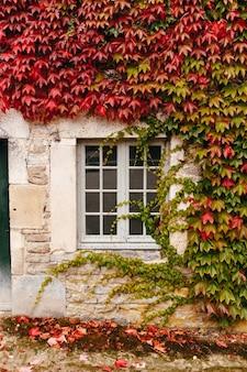 De gevel van een oud frans gebouw is verstrengeld met klimop.