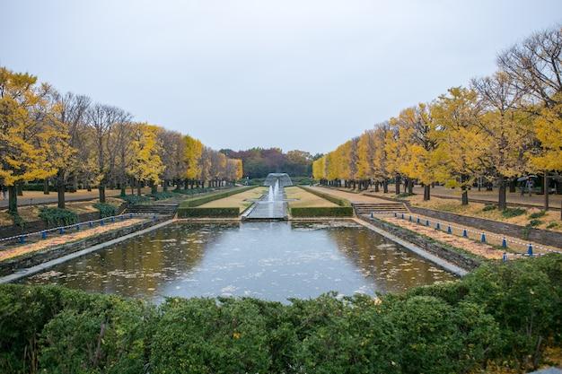 De ginkgo boomtunnels van de herfst in het herdenkingspark van showa, japan