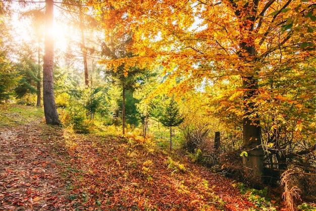 De gouden stralen van de ochtendzon op groen gras in de herfst.