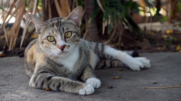 De grappige kattenprofielpagina staart
