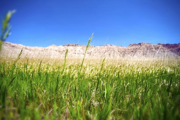 De grasslands