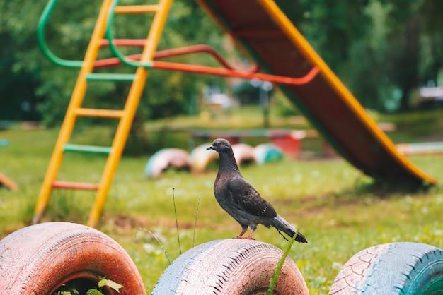 De grijze duif is op omheining op kleurrijke speelplaats in zonnige dag. stadsvogel van close-up. grijs-zwart vliegend dier bij het schermen.