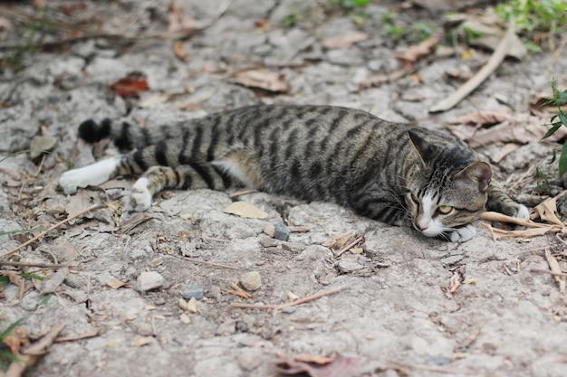 De grijze gestreepte kat geniet van en ontspant op grondvloer in tuin met natuurlijk zonlicht