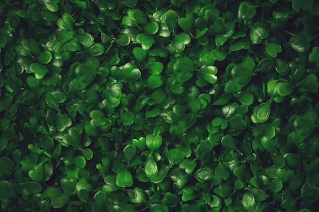 De groene achtergrond van de grastextuur. starweed -winterkruid, vogelmuur, satijnbloem, stellaria media- planten. goed groen blad. groene achtergrond. textuur. gras.
