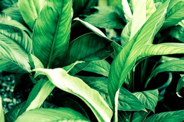 De groene achtergrond van het bladerenpatroon, natuurlijke achtergrond en behang achtergrond in donker licht