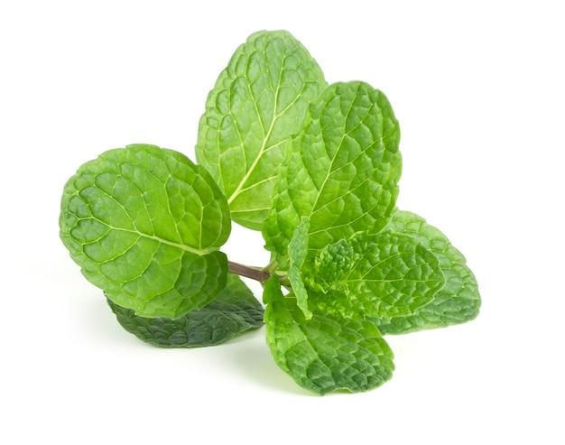 De groene bladmunt isoleert op witte achtergrond