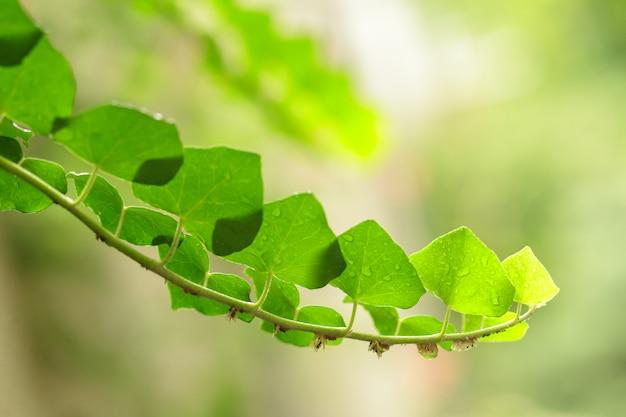 De groene close-up van het verse installatiesgras voor