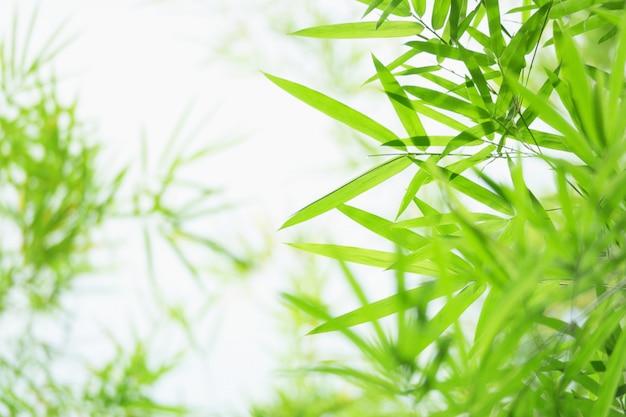 De groene en gele achtergrond van bamboebladeren in de aard.