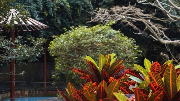De groene en rode achtergrond van bladbladeren. natuurtuin - tropische lente natuurlijke planten.