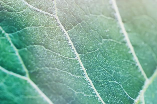 De groene grote textuur van burdokstruikbladeren. decoratieve plant afbeelding. zomertuin detail.